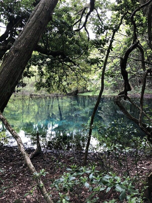 【庄内探検】神秘の「丸池様」はもしかしなくてもパワースポット!?