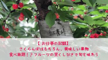 【お仕事紹介】さくらんぼはもちろん、美味しい果物食べ放題!? フルーツの里くしびきで旬を味わう